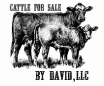 Cattle For Sale by David, LLC